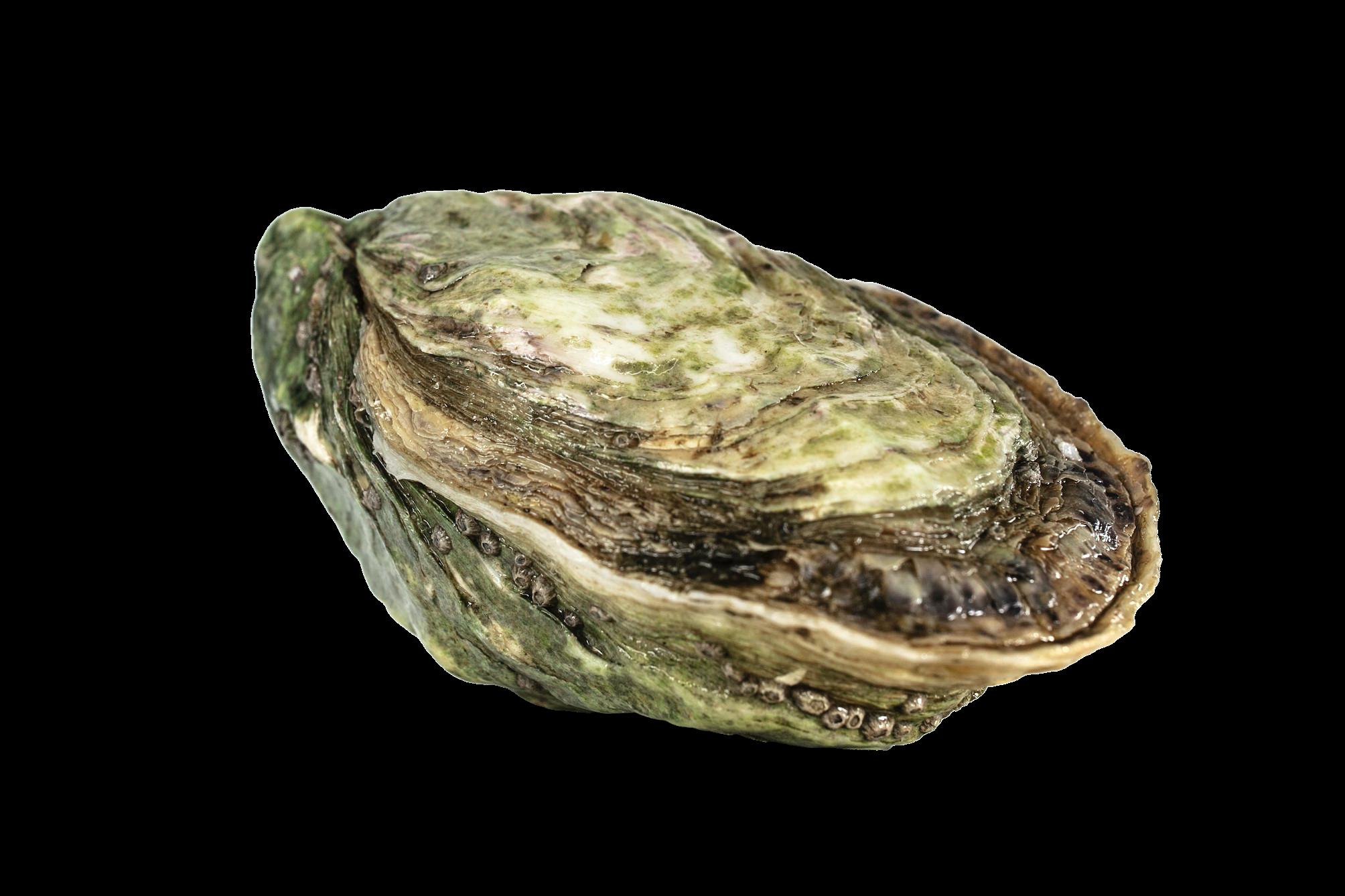Huîtres Joséphine