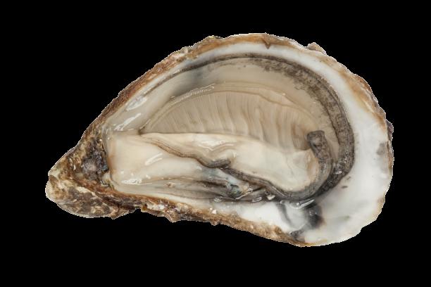 Huîtres Spéciales de claire Marennes Oléron