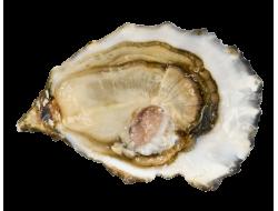 Huîtres spéciales «Écailles...