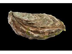 Huîtres spéciales Karine &...