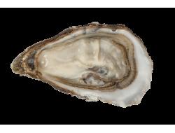 Huîtres spéciales d'Isigny