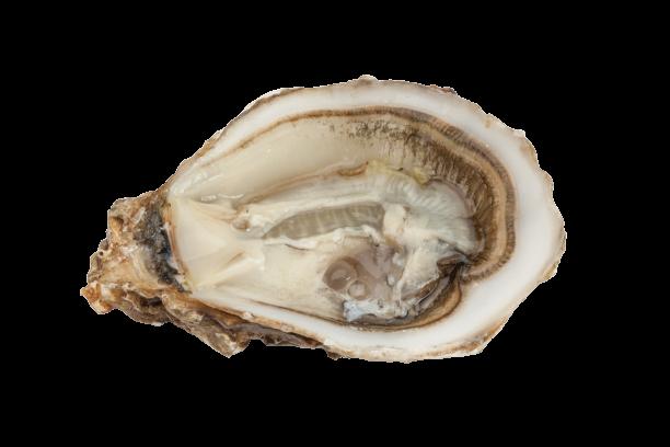 Huîtres Fines Creneguy